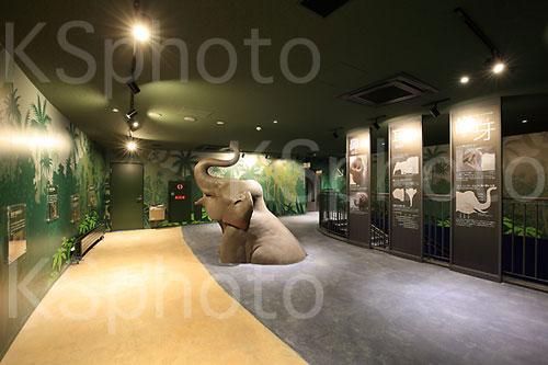 札幌市円山動物園 像舎